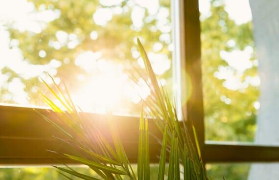 Sonnenschein Schmidinger Fenster