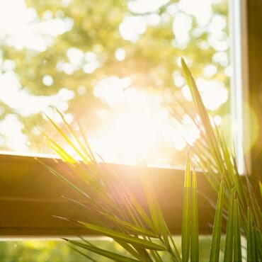 Fenster Sonnenschein